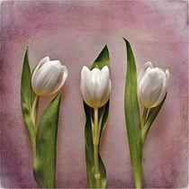 3-tulpen