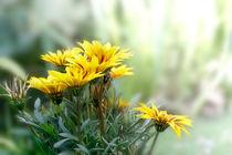 Blumen_1 von Sonja Losberg