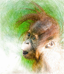 Portrait of a baby ape by Andrew Michael