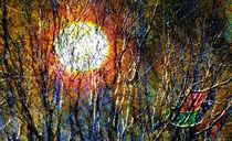 Sonnen-Geflecht |  Solar Plexus  |  Plexo del Sol by artistdesign