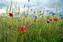 Blumenwiese von Katja Bartz