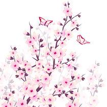 Kirschblüten von Nina Baydur