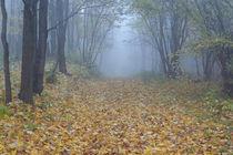 Ancient graveyard in autumn by Maksim Drozdov