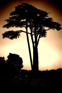 Stille unter dem Pinienbaum  von Bastian  Kienitz
