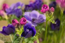 Blumengruß / 21 by Heidi Bollich