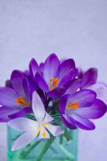 Blumengruß / 25 von Heidi Bollich