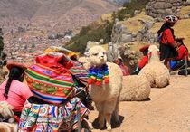 Alpakas in Peru mit Inkafrauen von Marita Zacharias