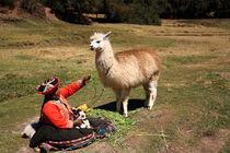 Peru-alpaka-2