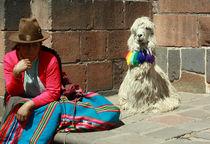 Peru-alpaka