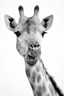 Funny giraffe  von Enrique del Campo