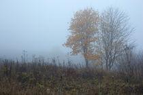 Autumn, foliage,fog by Maksim Drozdov