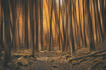 Wald der Wunder von Heiko Döhrling