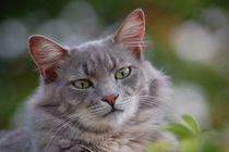 Cat-664433