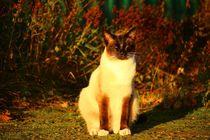 Cat-1040725-1920