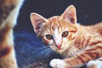 Cat-907495-1920