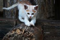 Cat-941308