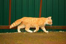 Cat-1094292