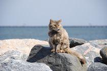 Katze im urlaub by sigursson