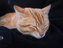 Cat-1090154
