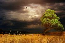 Tree-in-a-quiet-bay