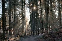 Licht im Wald 2 by Bruno Schmidiger