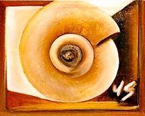 Ammonite by Wolfgang Schmidt