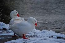 Winter im Englischen Garten... 9 by loewenherz-artwork