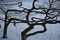 Winter im Englischen Garten... 11 by loewenherz-artwork