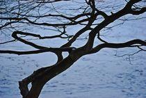 Winter im Englischen Garten... 5 by loewenherz-artwork