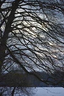 Winter im Englischen Garten... 6 by loewenherz-artwork