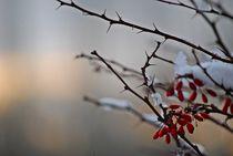 Winter im Englischen Garten... 3 by loewenherz-artwork