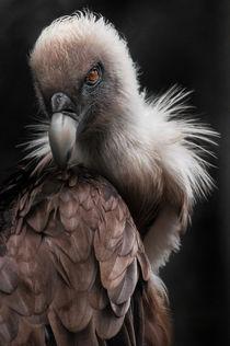 Birdie7roh