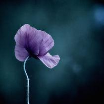 Moonlight-Flower by Josephine Mayer-Hartmann