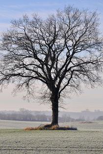 Rotbuche im Winter by Peter Eggermann
