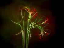 Blütendekadenz