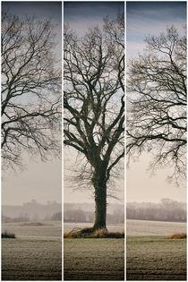 Rotbuche im Winter - 3 Teiler by Peter Eggermann