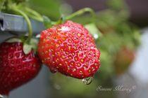 Erdbeere mit Wassertropfen -reif- von Simone Marsig