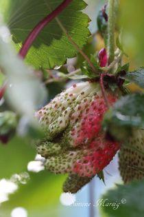Erdbeere wird langsam reif von Simone Marsig