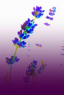 Lavender by M. Ziehr