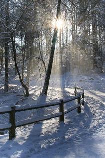 Ein-schoener-wintertag