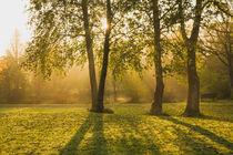 Morgenstimmung im Park von Heidi Bücker