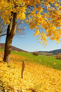Leuchtender Herbst von Heidi Bücker