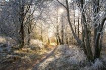 Winterwald von Heidi Bücker