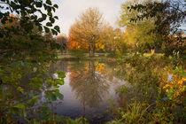 Herbstfarben am Teich von Heidi Bücker