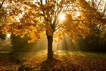 Herbstleuchten von Heidi Bücker