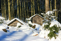 Futterstelle im Winterwald von Heidi Bücker