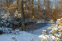 Teich im Winterwald by Heidi Bücker