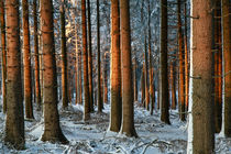 Winterwald by Heidi Bücker