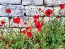 wallflower by Wolfgang Pfensig