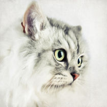 Katzenportrait by AD DESIGN Photo + PhotoArt